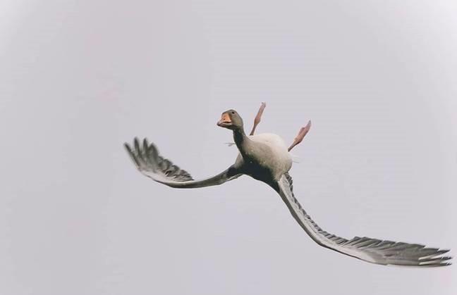 O gasca zboara cu capul in jos si lasa oamenii nedumeriti!